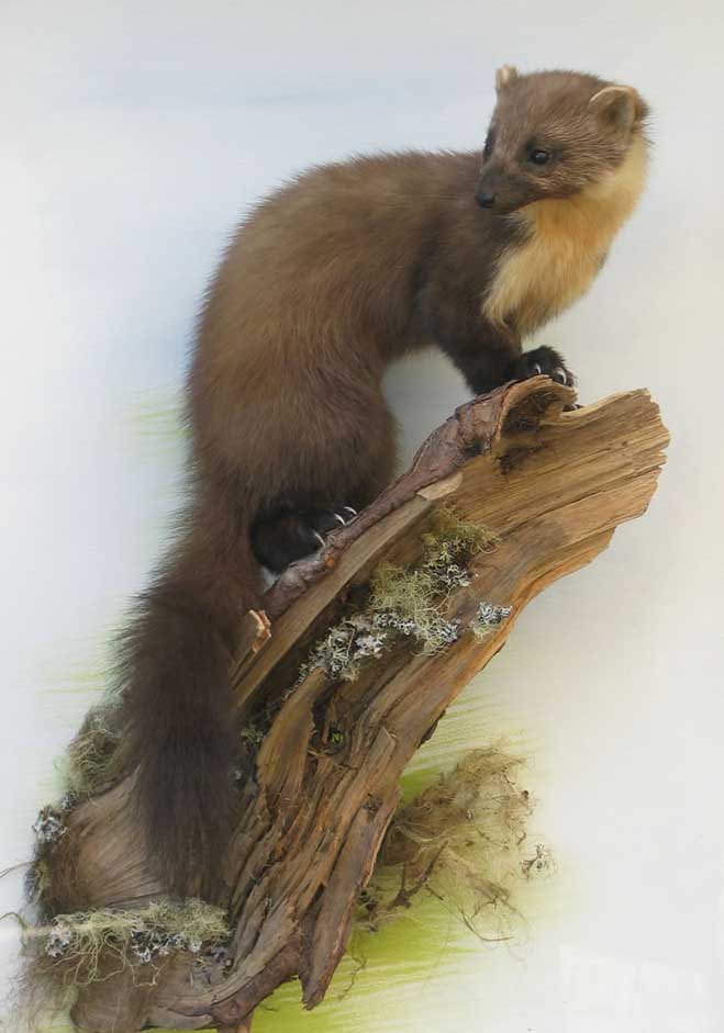 pinemarten-v2.jpg